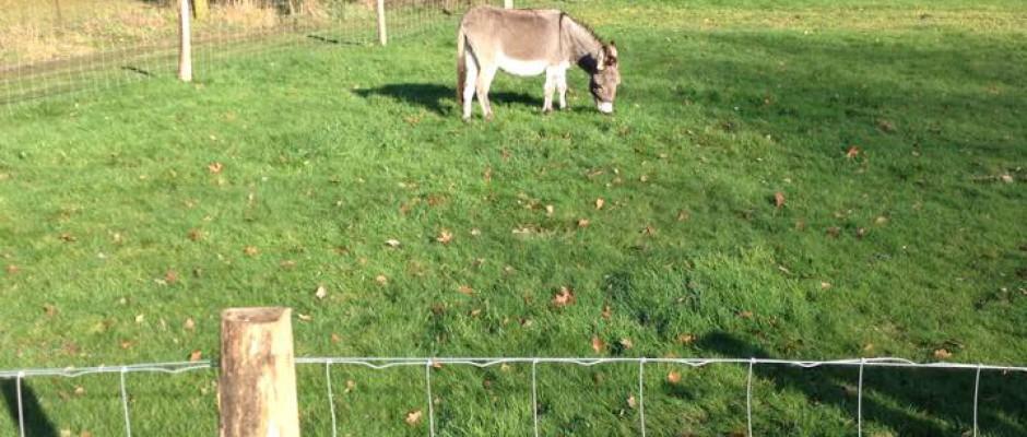 Kinderboerderijen LosserHof en Almelo tijdelijk gesloten